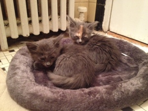 Almond Joy (foreground) and Reese (background) first night in their Bathroom Suite at The Apartments of Eternal Christmas